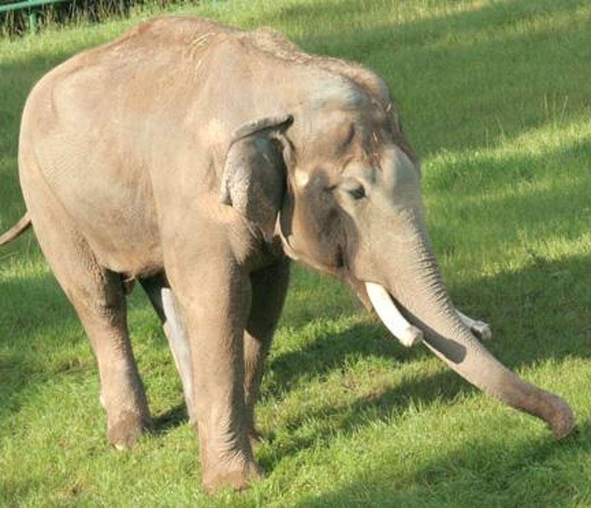 Indy, photo courtesy Rosamond Gifford Zoo
