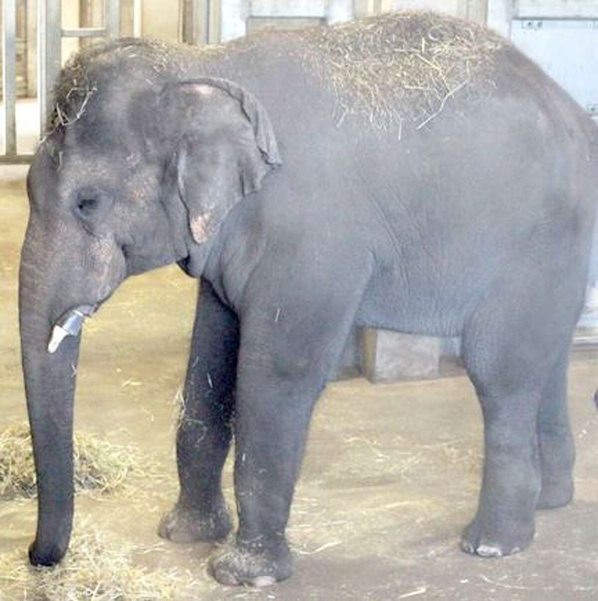 Doc, photo courtesy Rosamond Gifford Zoo