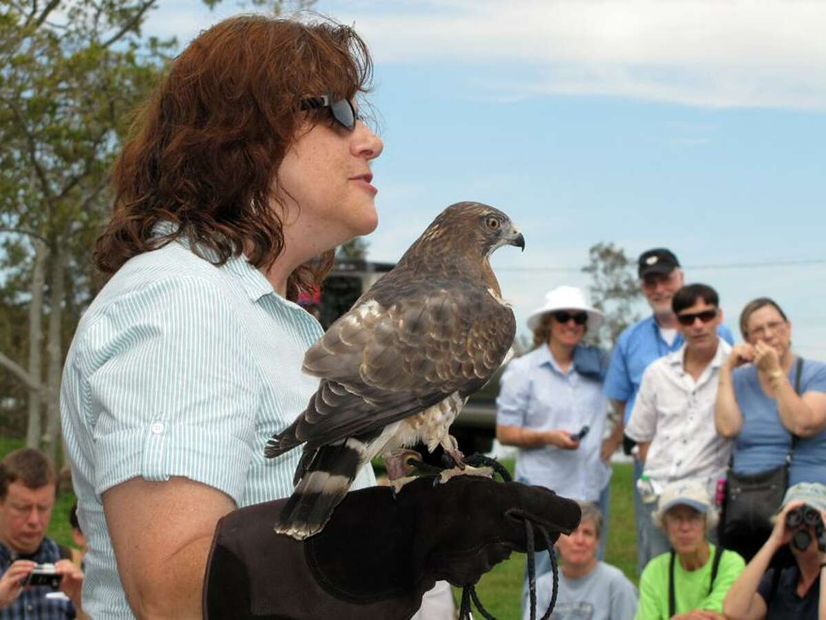 Contributed: At last year's event MaryBeth Kaeser of Horizon Wings wowed the crowd with this broad-winged hawk, which was part of the raptor show.