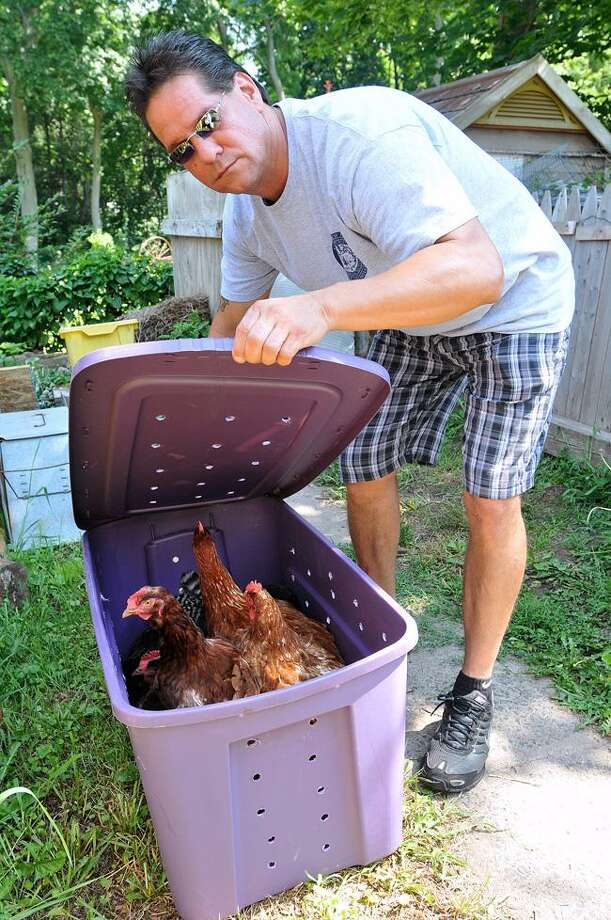 LCI's Rickie Mazzadra shows some of the chickens taken Tuesday from the apartment of a multi-family home on Rockhill Road in New Haven.
