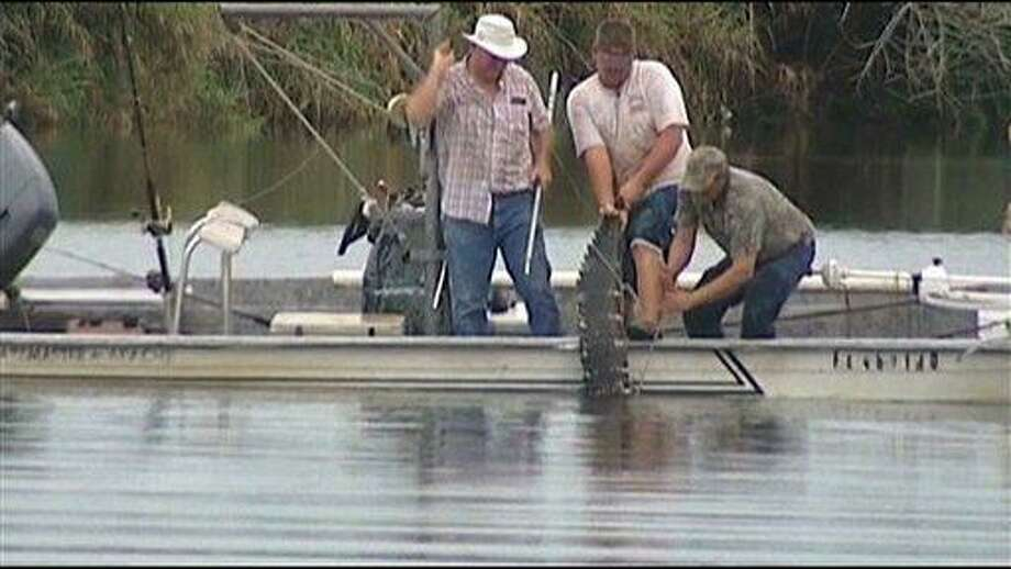 In this image made from video, an alligator that attacked a swimmer is pulled from the water after it was killed Monday evening in the Caloosahatchee River near Moore Haven, Fla. Associated Press Photo: AP / WBBH TV