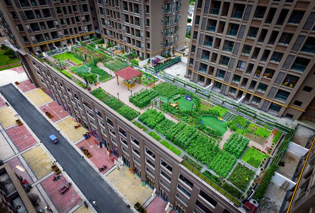Rooftop farms  Jazzmine Rosales: