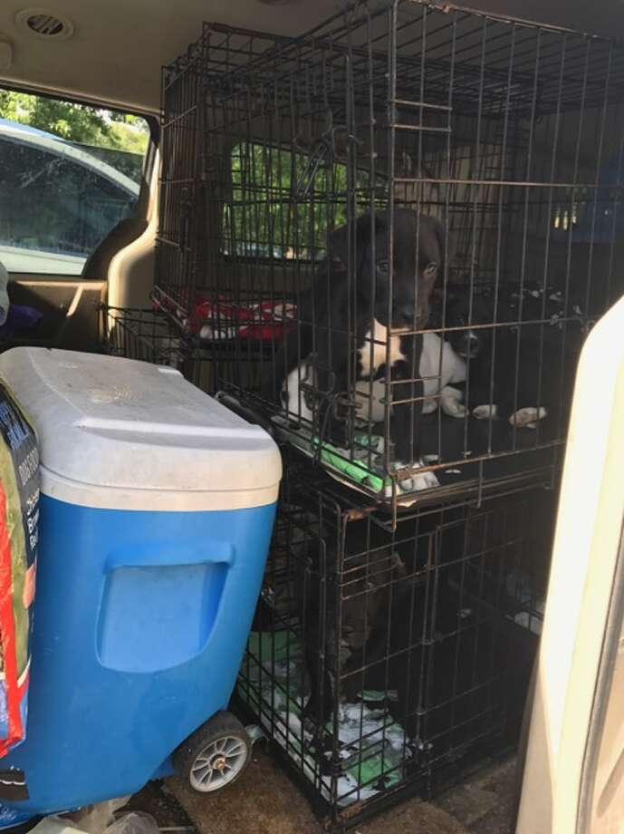 The Humane Society of North Texas and Keller Animal Control officers seized 27 dogs and 84 cats from a home in the 300 block of Anita Avenue in Keller, Texas on July 25, 2017. Photo: Humane Society Of North Texas