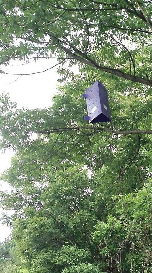 "Dispatch Staff Photo by JOLENE CLEAVER An emerald ash borer ""purple prism"" trap."