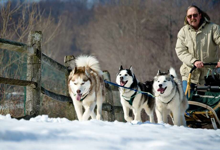 Heather Williams photo: No snow? No problem for the Connecticut Siberian Husky Club, which will demonstrate sled dog mushing at Winterfest. / Inception Imaging