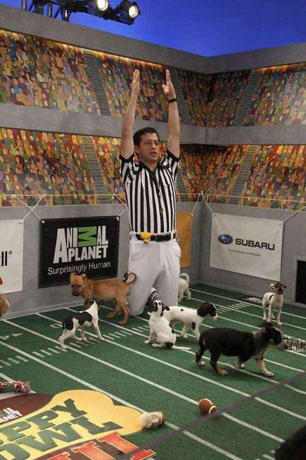 """Kim Holcombe/Animal Planet photo: Animal Planet is part of the big sports-on-TV day with """"Puppy Bowl VIII"""" at 3 p.m."""
