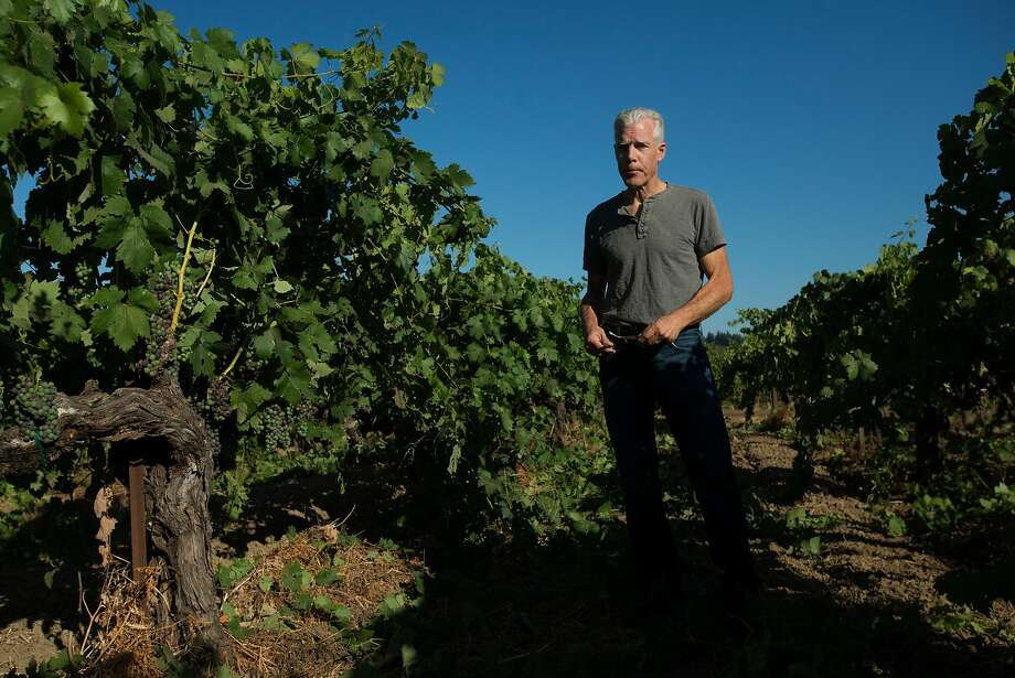 Winemaker Ted Seghesio of Seghesio Family Vineyards checks on the progress of his Zinfandel clusters at Chen's Vineyard in Healdsburg. Photo: Erik Castro, Special To The Chronicle