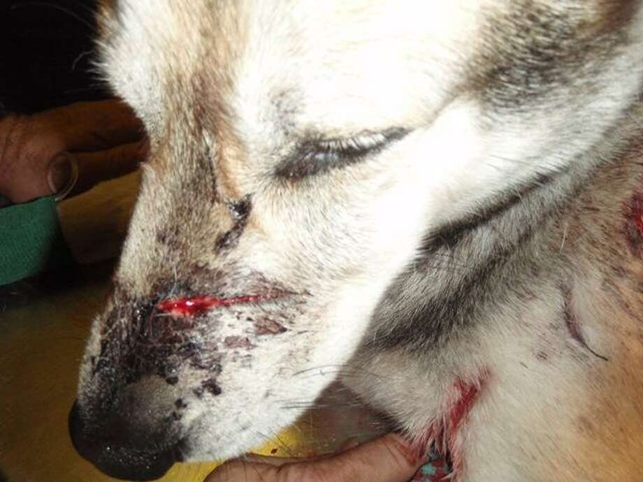 Rocky was stabbed in Milford on Sept. 23