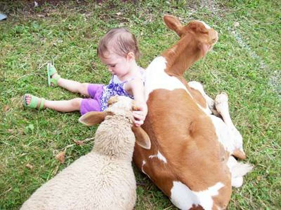 Photo Special to the Dispatch by MIKE JAQUAYS Rebekah Cullen, then 2, of Munnsville makes a new petting zoo friend at last year's Stockbridge Valley Ruritans' Community Fair.