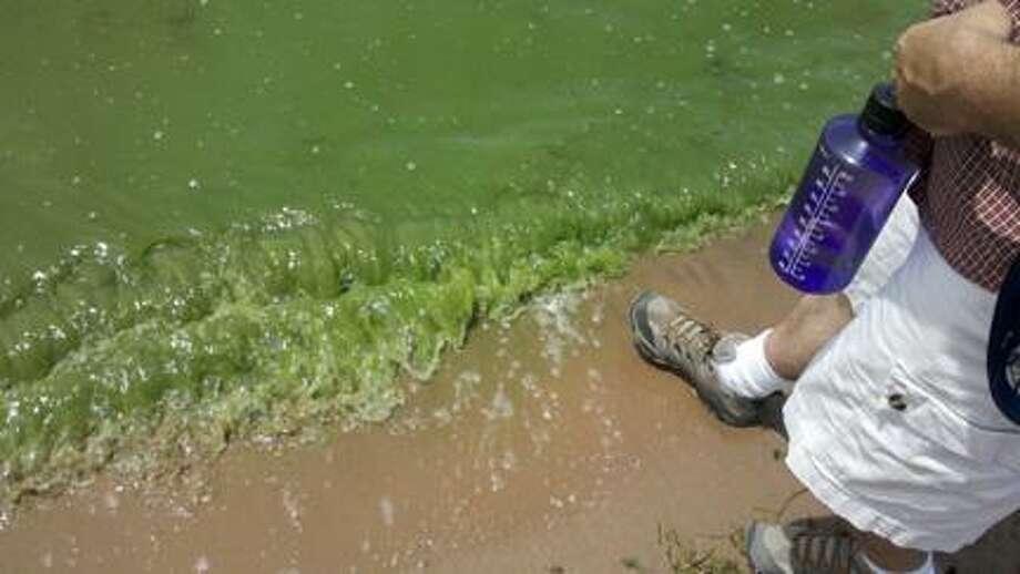 Photo courtesy SYLVAN BEACH Blue-green algae in the water at Oneida Lake.