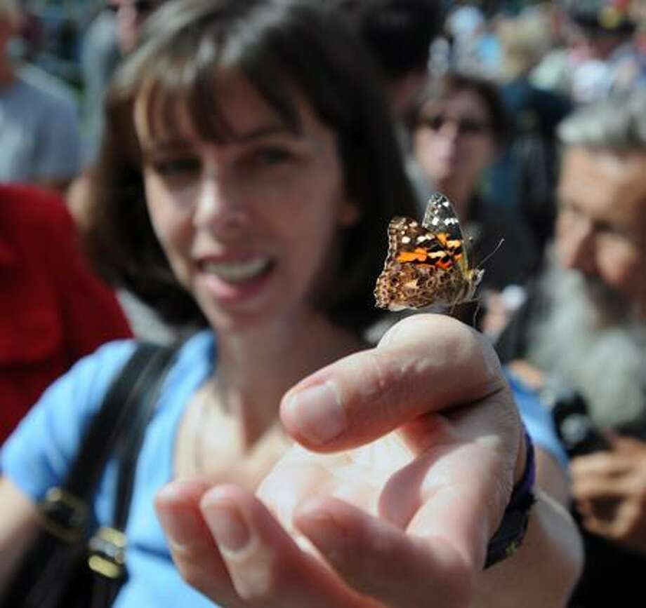 Lynda Williams of Branford gets a closer look at one of the 300 painted lady butterflies released during the 10th anniversary remembrance of 9/11 Sunday on the Branford green. The event was organized by the Branford Rotary. Peter Casolino/Register  9/11/11