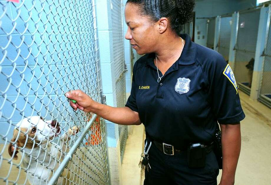 Municipal Animal Control Officer Stephani Johnson is photographed with Karima, a pit bull, at the New Haven Animal Shelter recently. Arnold Gold/Register