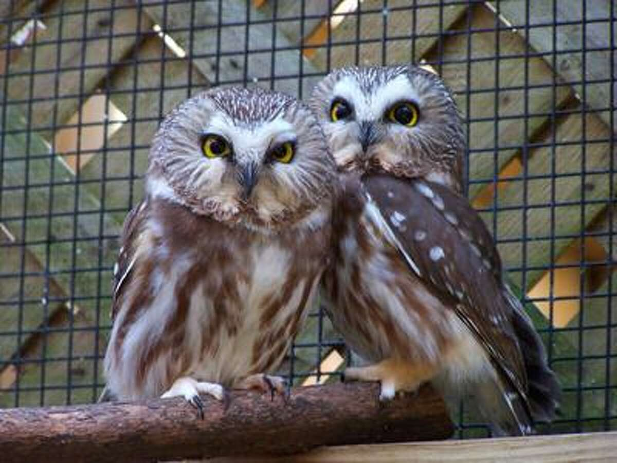 Contributed photos: Raptors, including these saw-whet owls, will be the subject of a Menunkatuck Audubon Society meeting and talk this week in Branford. And last but not least, whales get the IMAX treatment at the Maritime Aquarium at Norwalk. For details, see today's Nature Calendar. TAKE YOUR BEST SHOT Readers are invited to send their nature photos and comments to features@nhregister.com or post them on our Facebook fan page, www.facebook.com/newhavenregister