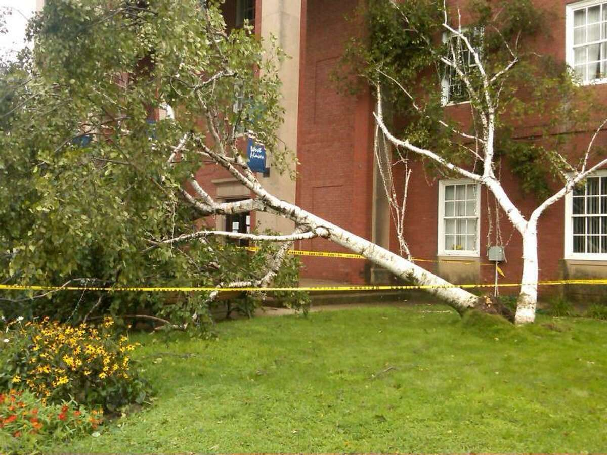 Downed tree in front of West Haven City Hall. (Courtesy of Ann Marie Paone-Mullin)