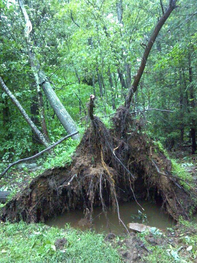 An uprooted tree. Picture submitted by Randy Howe of Madison.
