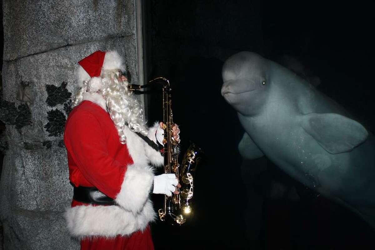 Music lovers will love Saxophone Santa. Juno the beluga does.