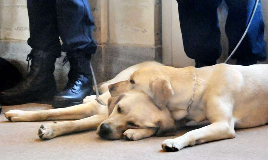 Canine explosive detectors snooze during an introduction ceremony at Union Station Tuesday. Melanie Stengel/Register