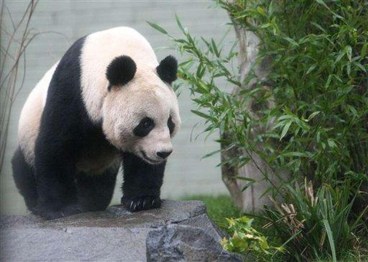 Tian Tian Associated Press