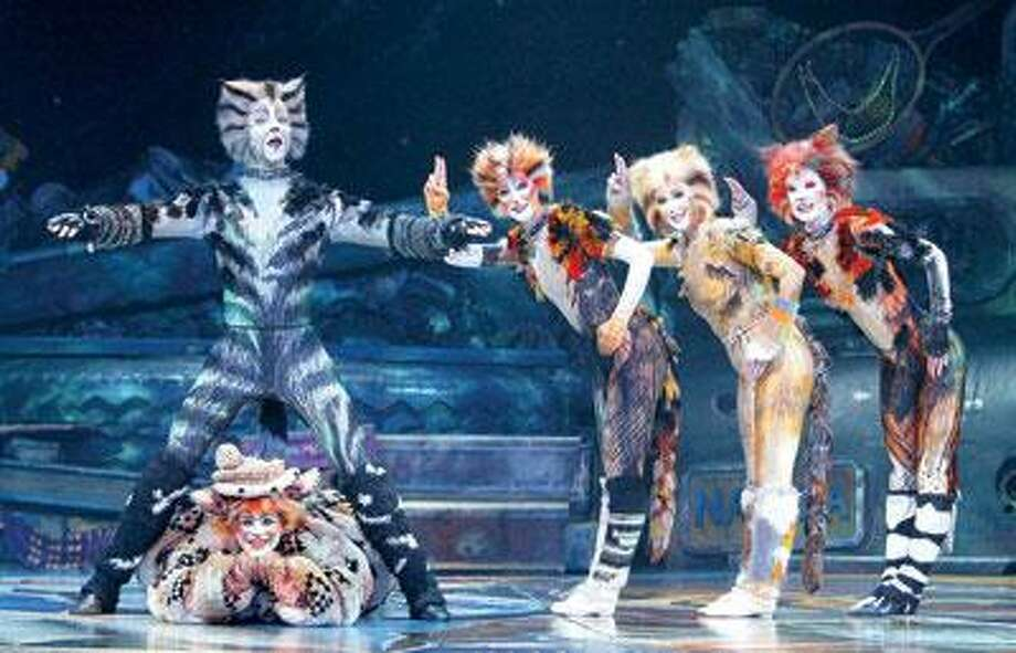 Rum Tum Tugger shows why the ladies love him. (Contributed Photo)