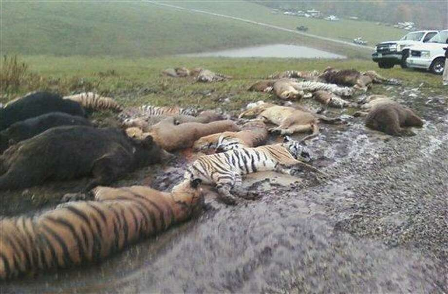 In this photo obtained by the Associated Press, carcasses lay on the ground at the Muskingum County Animal Farm Wednesday, Oct. 19, 2011, in Zanesville, Ohio. Sheriff's deputies shot 48 animals , including 18 rare Bengal tigers and 17 lions, after Terry Thompson, owner of the private Muskingum County Animal Farm near Zanesville, threw their cages open Tuesday and then committed suicide.  Thompson died of a self-inflicted gunshot wound and also had a bite wound on the head that appeared to have come from a large cat, such as a Bengal tiger, county Sheriff Matt Lutz said Thursday morning.   (AP Photo/HO) Photo: AP / AP
