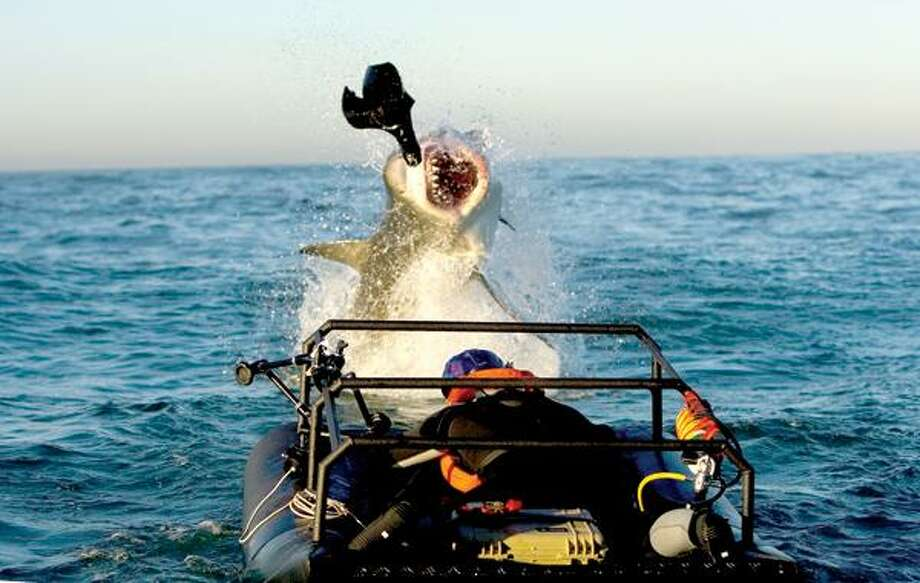 """A great white shark breaches the water inches away from shark expert Chris Fallows in a """"Seal Sled"""" as seen on """"Ultimate Air Jaws"""" at 9 p.m. Sunday. BELOW: James Badge Dale of """"Rubicon."""" Contributed photo."""