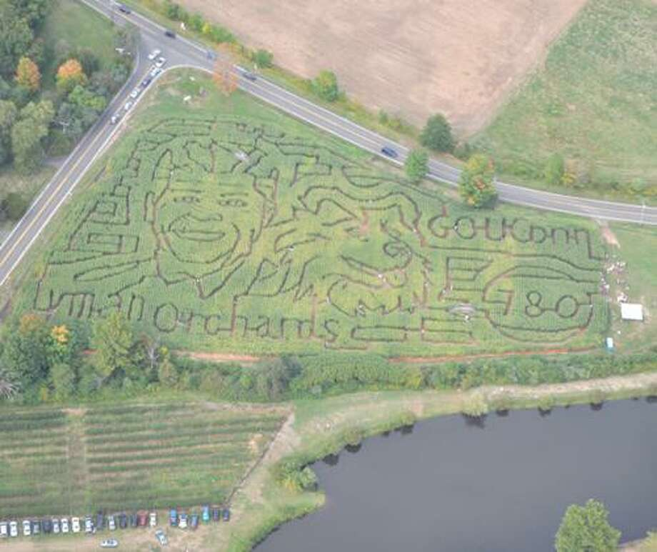 A-MAZE-ING HUSKIES: UConn Hoops featured in Lyman Orchards' annual fall corn maze.