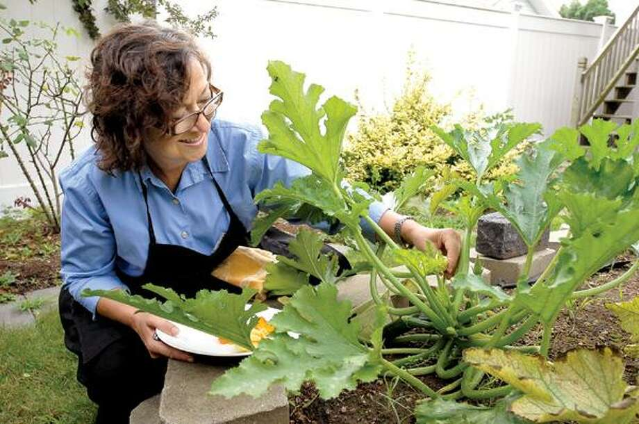 Peter Casolino/Register photos To ensure a good supply of blossoms, Claire Criscuolo grows plenty of zucchini in her garden in East Haven.