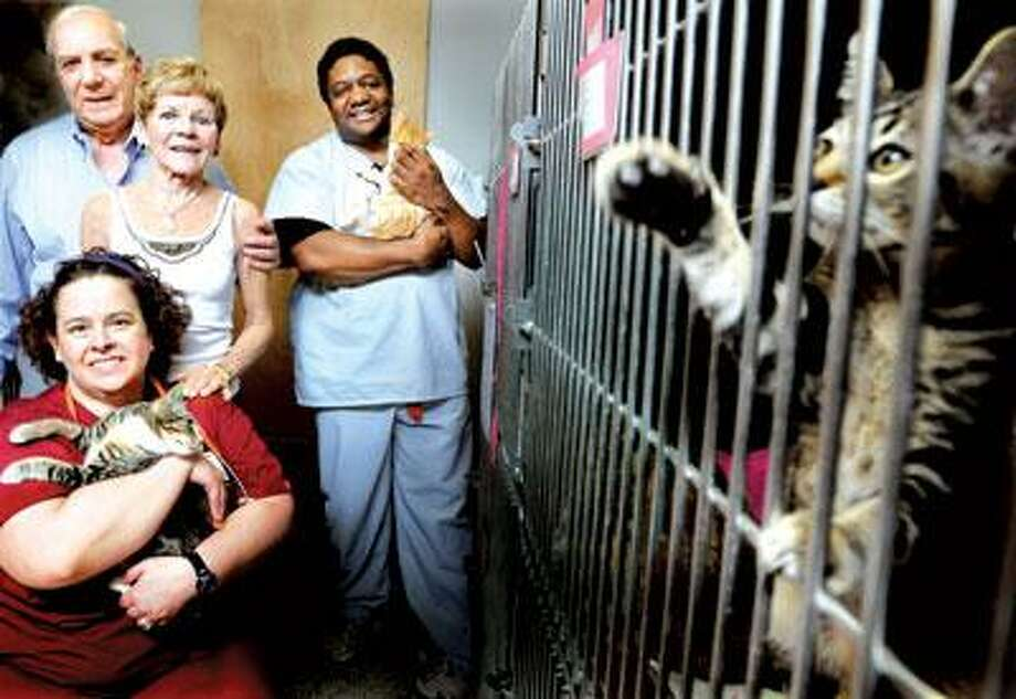 Front to back, Mary Tedford, Ray and Judy D'Antoni and John Stephens show off some of the clients at the Purr Project cat rescue agency in New Haven. (Melanie Stengel/Register)