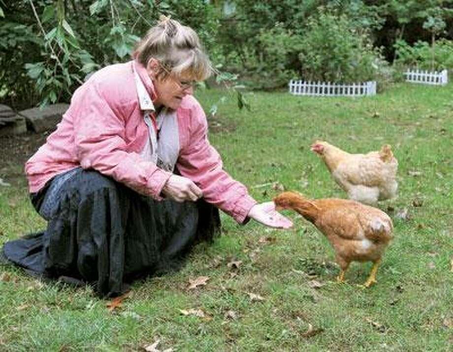 Rosemarie Morgan of Bishop Street keeps a few red rock hens. (Peter Casolino/Register)