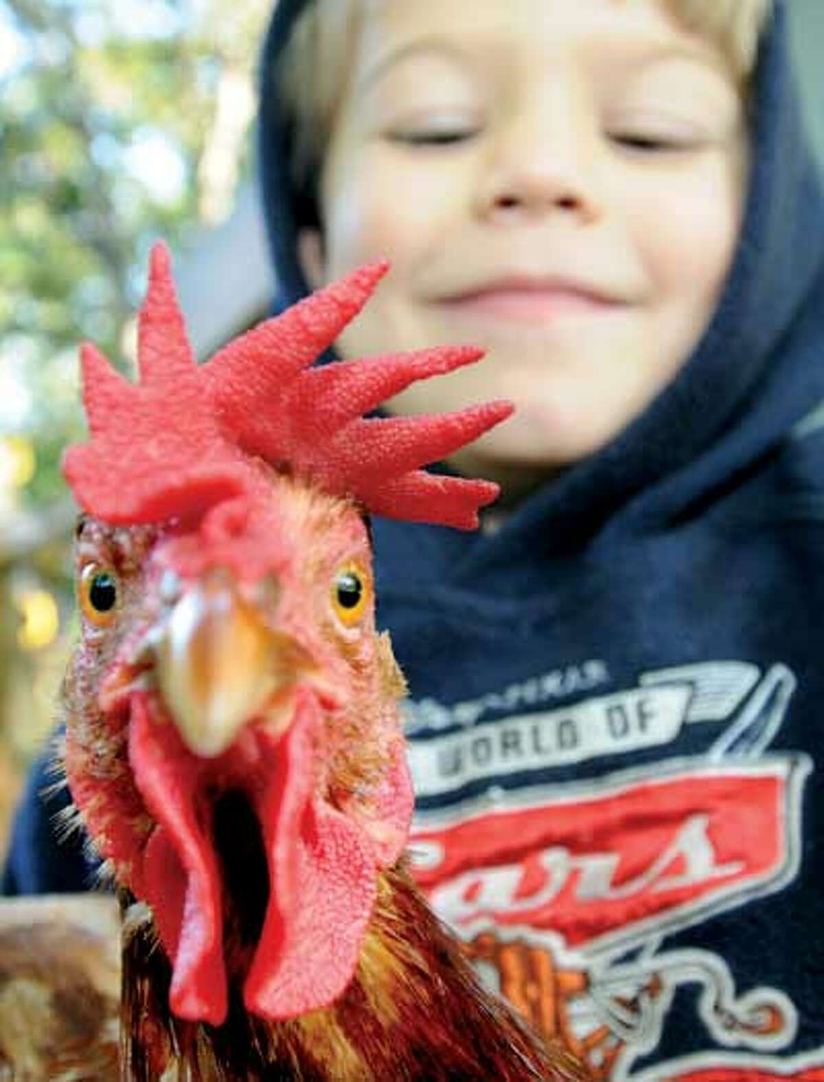 Aidan Nolde got to name all of the family hens: There's Queenie, Twisty, Lemon and Flappy Ding Dong. (Peter Hvizdak/Register)