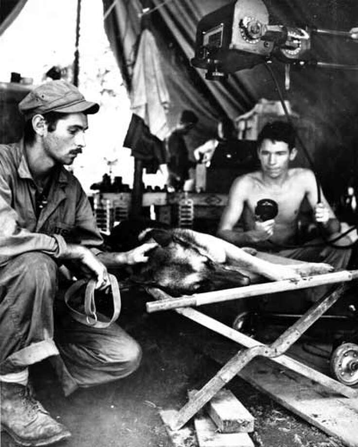 A Marine Corps dog handler comforts his German shepherd while the dog is X-rayed after being shot by a Japanese sniper on Bougainville. The dog died of its injuries.