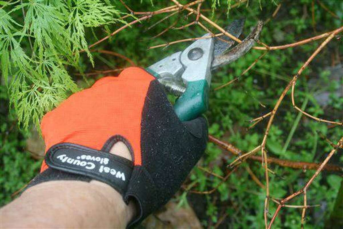 Scores of eco-ingenious products are finding their way back into the garden. These breathable, soft but durable work gloves were made from a plastic that was recycled from beverage bottles. Every recycled glove means one less eight-ounce plastic bottle being tossed into a landfill, the manufacturer claims. (AP Photo/By Dean Fosdick)