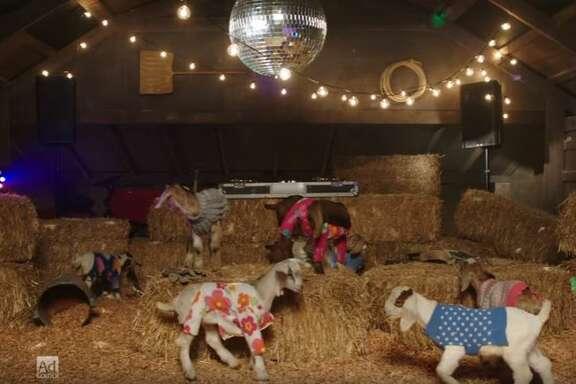 "A screenshot of ""Baby Goat Disco."""