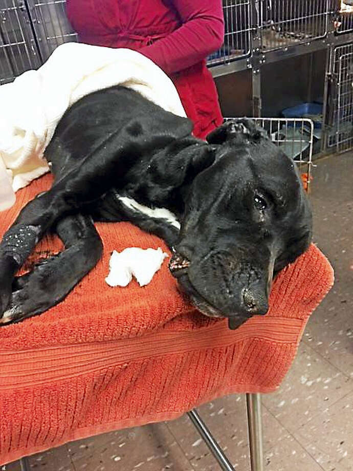 Hope the dog Photo: Courtesy Of Dan Cosgrove Animal Shelter