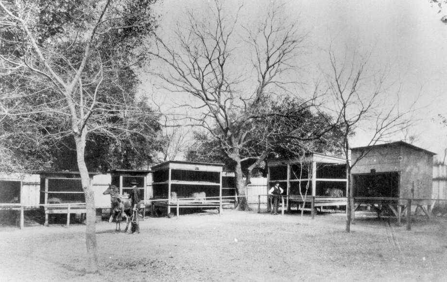 "Hector Cardenas, president of the Friends of San Pedro Park, said that ""by 1894, (the museum at the park) became more of a zoo."" That zoo was moved to Brackenridge Park in 1914. Photo: San Antonio Express-News /File Photo / San Antonio Express-News"