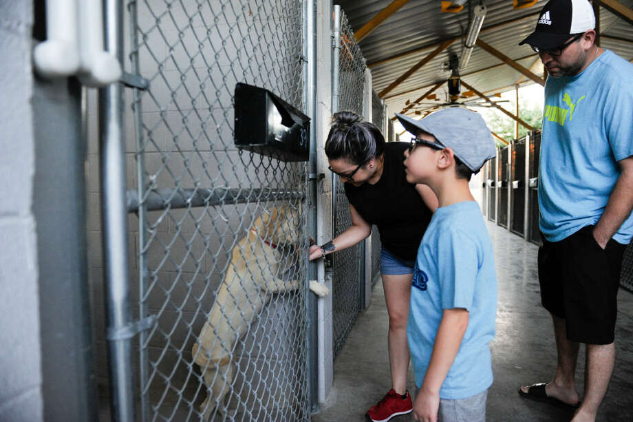Nancy Jalomo, Nicholas Martinez and Abel Martinez meet with one of the dogs up for adoption on Saturday, July 29, 2017 at the Laredo Animal Care Facility during Shane's War Campaign Grand Finale Event Celebration. Photo: Danny Zaragoza/Laredo Morning Times
