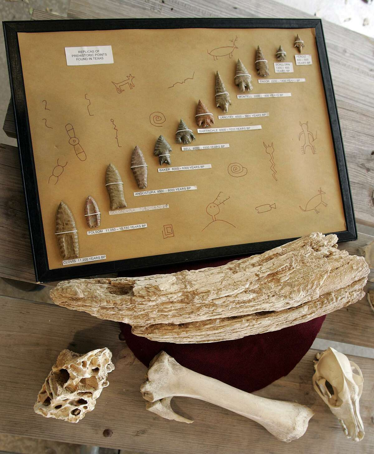 """As part of its Legacy outreach program, the Center for Archaeological Research hosted """"Long, Long Ago,"""" a hands-on activity presented at Eisenhower Park in 2006. This is a display showing a chronology of stone points, along with a mammoth bone and tusk, a coyote skull and bison bone."""