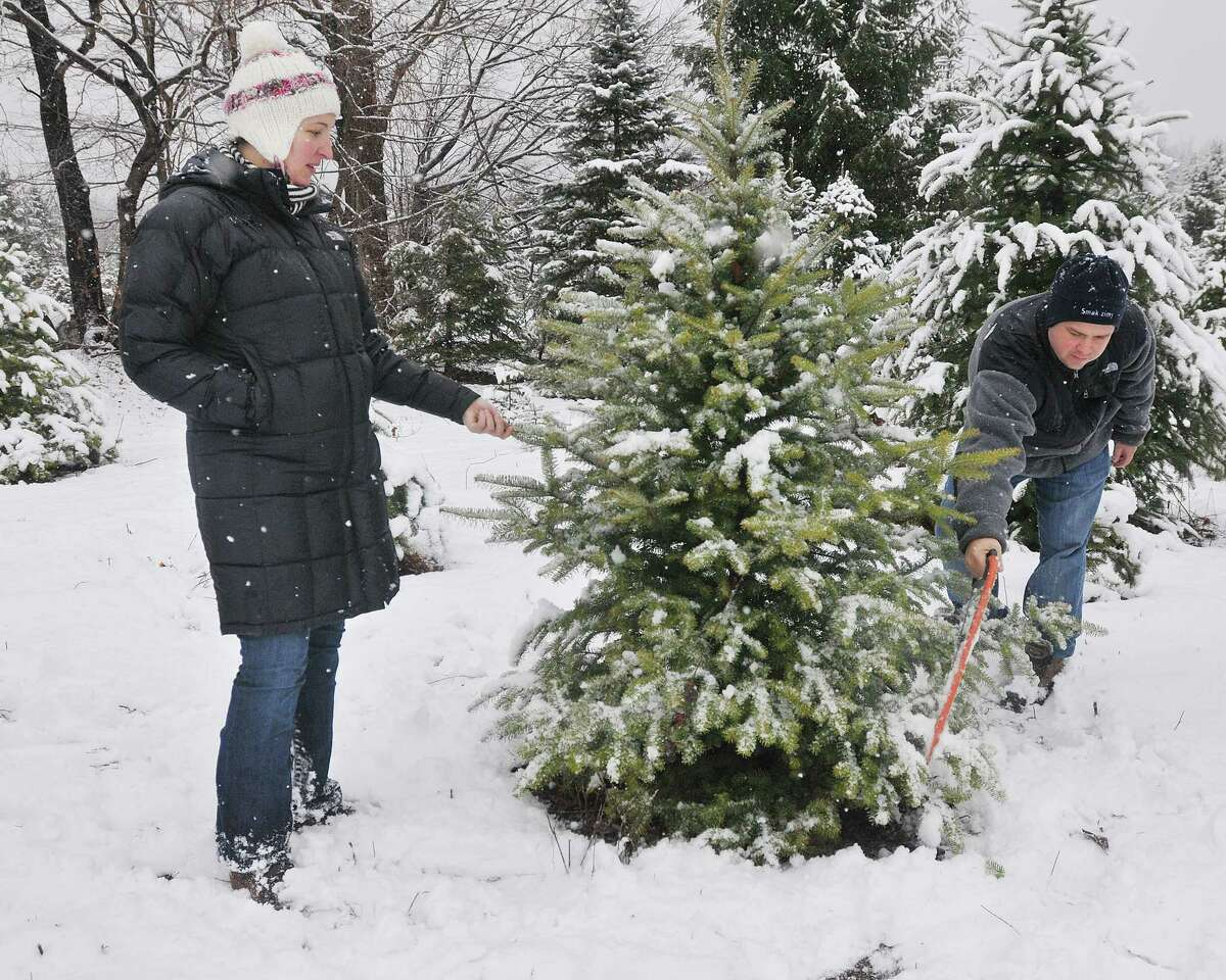 Wallingford resident Ewelina Karsky and her husband Gregory scope out a tree at Miller Tree Farm in Durham Tuesday afternoon. Ewelina, who moved here from Poland 13-years ago, was very anxious to get home to their six-week old baby. Catherine Avalone - The Middletown Press