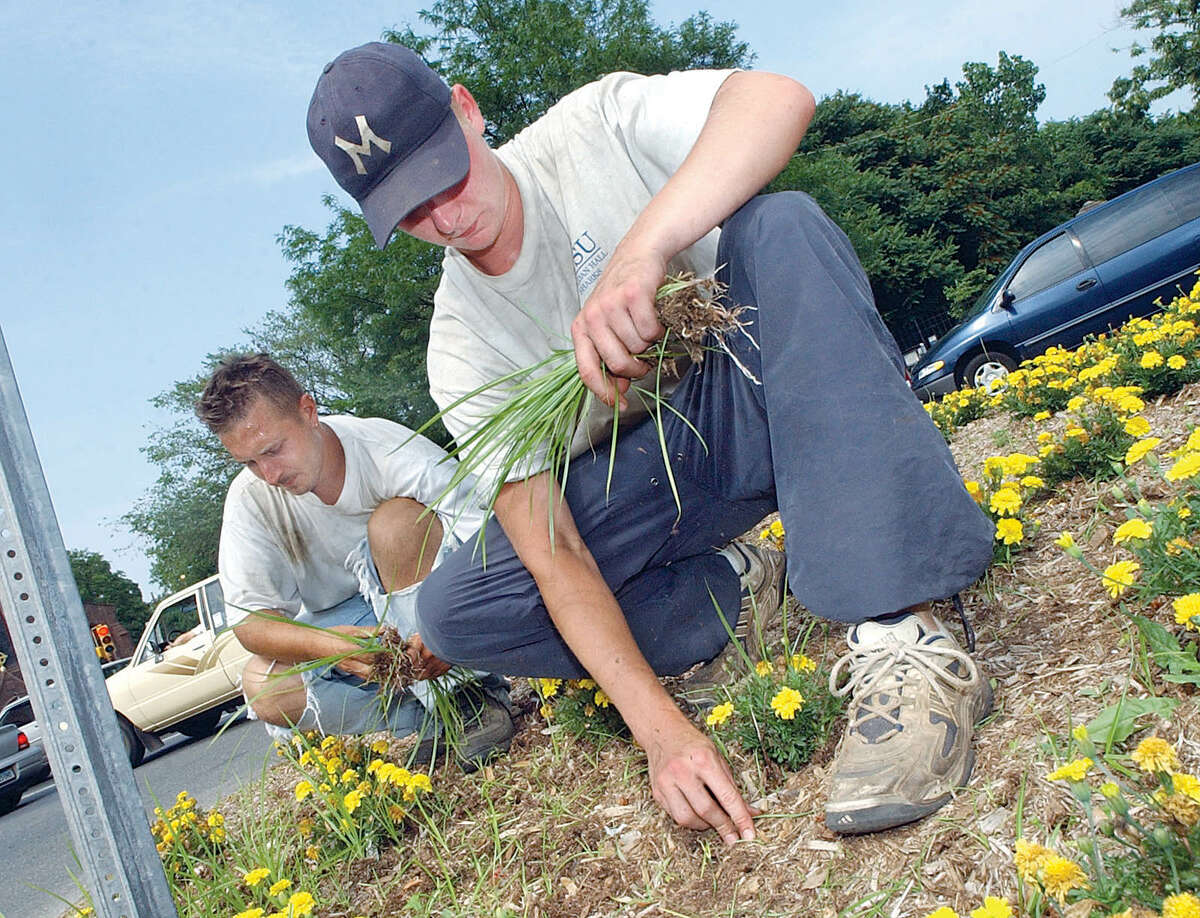 Troy Johnson and Todd Youngberg, employees of Affordable Landscaping of Middletown, pull weeds from a traffic island on Main Street in the North End of Middletown in this 2003 file photo.
