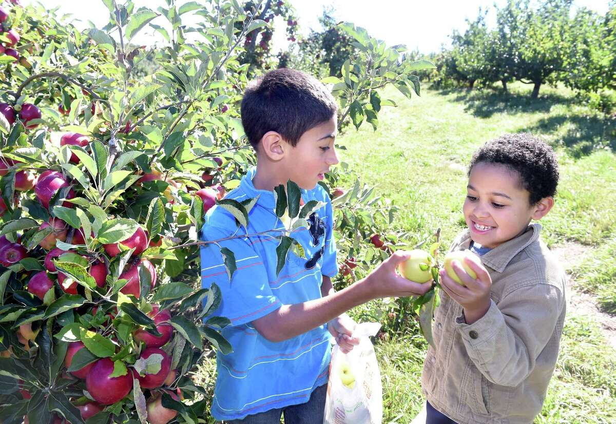 Bishop's Orchards - Guilford  Apple season begins late August Masks required