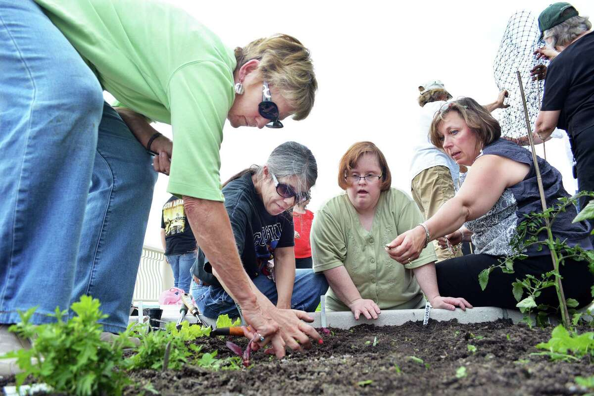 """June 11, 2014 - Middletown Garden Club project leader Melissa Roberts, at left and at far right Lori Lodge, director of development at MARC, plant vegetable seeds with Mary H. and Sharyl B. at the Community Health Center's roof top garden Tuesday. """"We started planting a month ago,"""" said Lodge, director of development at MARC. """"There's garlic, radishes, strawberries, tomatoes, zucchini, squash and peppers among others.""""In this second year of the program, MARC """"consumers,"""" as they are known, are assisted by members of the Middletown Garden Club, who teach them gardening skills. (Catherine Avalone/The Middletown Press)"""