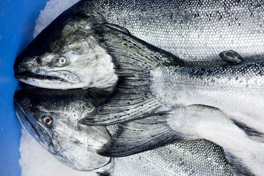 Commercial salmon season finally arrives in the bay area for Salmon fishing bay area