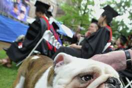 Handsome Dan, Yale University's bulldog mascot, stands near future graduates during commencement at Yale University in New Haven, Conn., Monday, May 24, 2010.