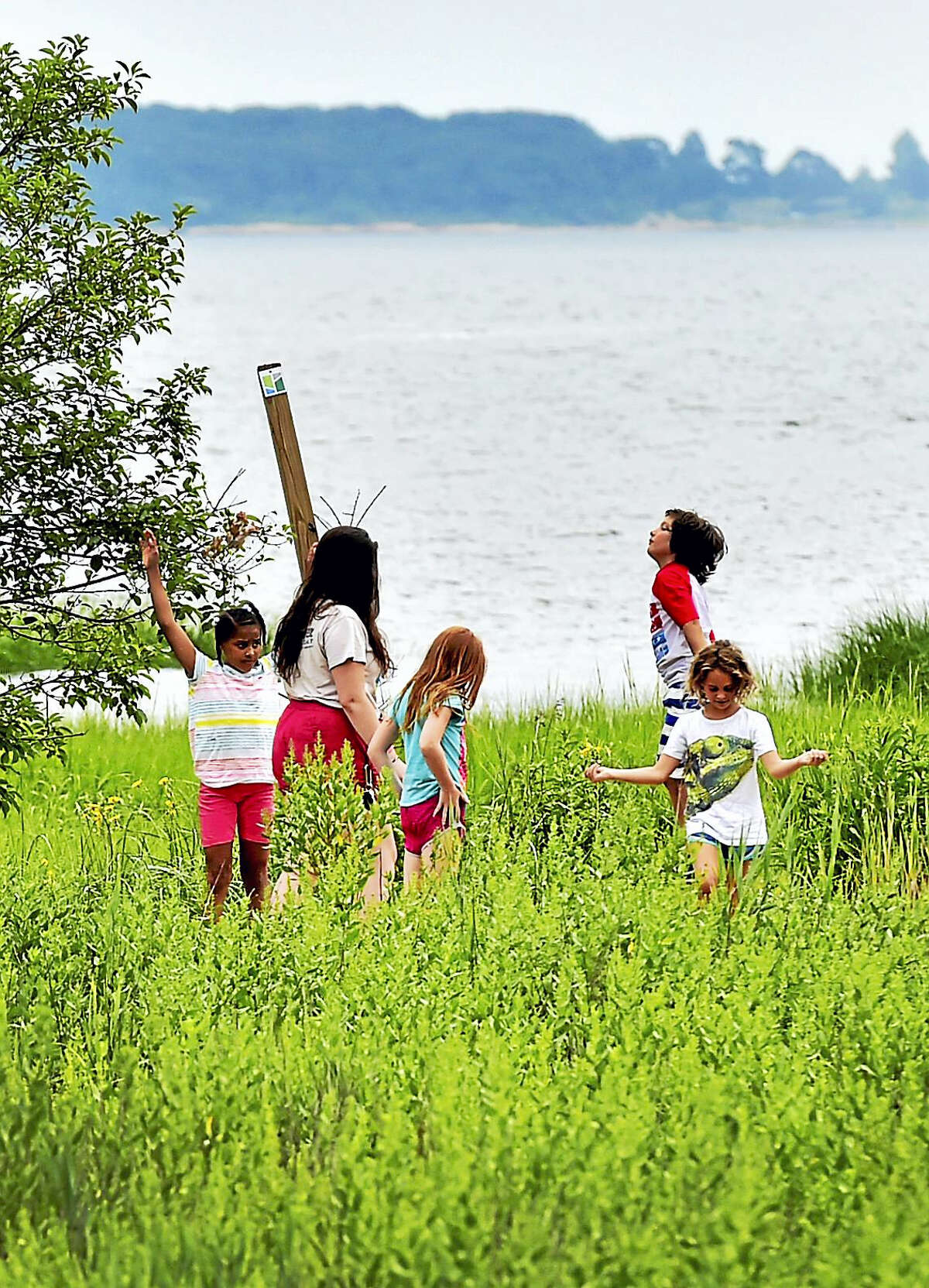 New Haven Land Trust Schooner Camp campers explore the New Haven Land Trust Long Wharf Nature Preserve Thursday at the Sound School facilities in New Haven.