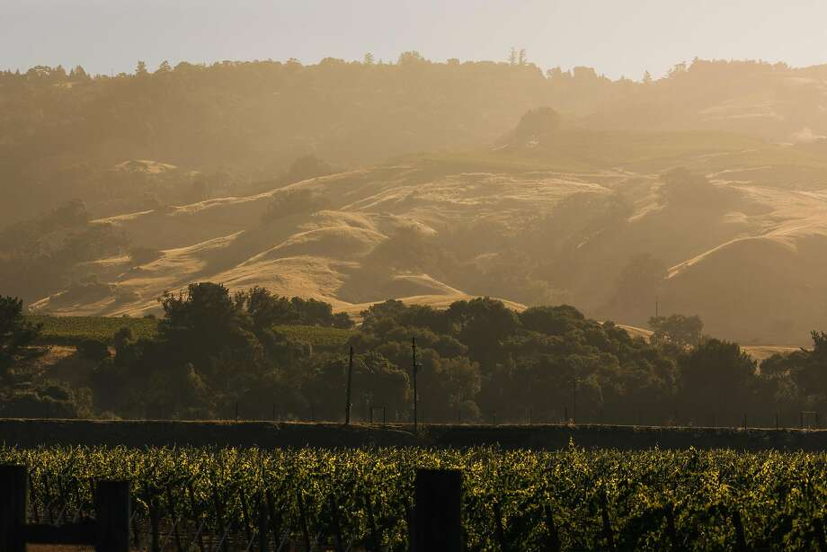 The hills of Anderson Valley wine country at sunrise near Boonville. Photo: Mason Trinca, Special To The Chronicle