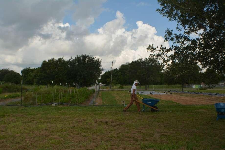 SUNNYSIDE - A volunteer farmer pushes a wheel barrel of fertilizer across Hope Farms, which is preparing for fall production. (Aug.2, 2017) Photo: John D. Harden / Houston Chronicle)