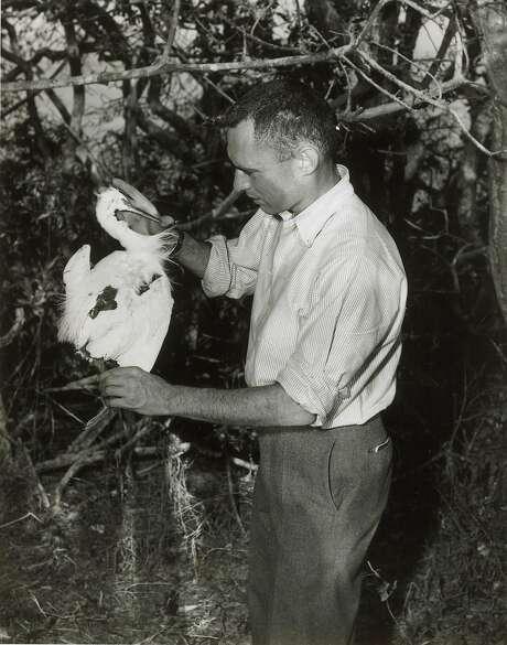 David Perlman on Marin Island in 1955. Photo: Arthur Frisch
