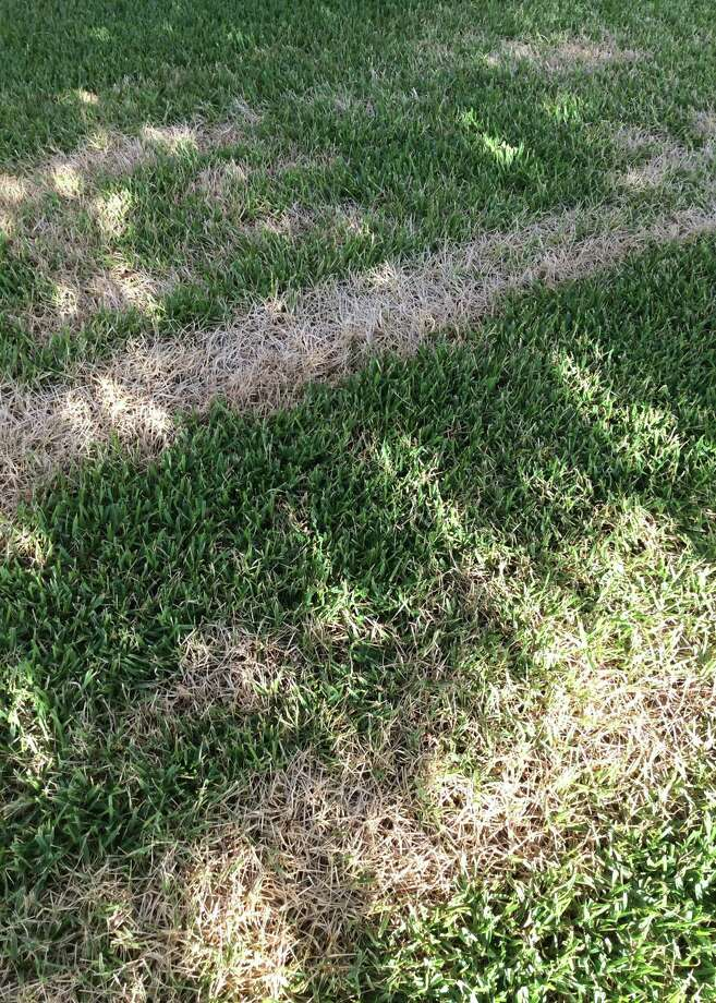 The damage to this lawn could be from a gasoline spill, a muffler burning the grass or some other type of mechanical damage to the grass. It's not likely to be an insect or disease with such a regular pattern, Photo: Courtesy Photo