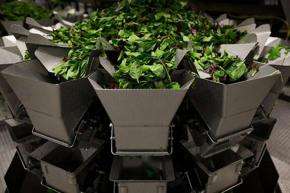 Leafy greens fall through the multihead weigher system into a hopper where it is accurately weighed before falling down into the packaging level at the Taylor Farms processing facility in Salinas, Calif. Thursday, July 20, 2017.