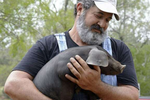 Mark Escobedo holds one of his prized Heritage breed piglets on his South Texas Heritage Pork farm just outside Floresville.